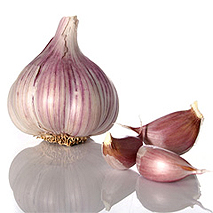how to grow garlic from garlic sets