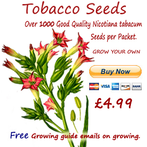 tobacco seeds for sale