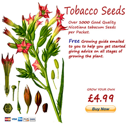 grow your own tobacco from seed
